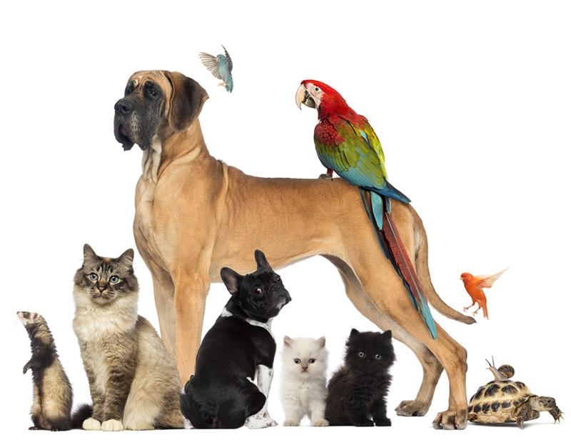 Seguro de Animais Domésticos