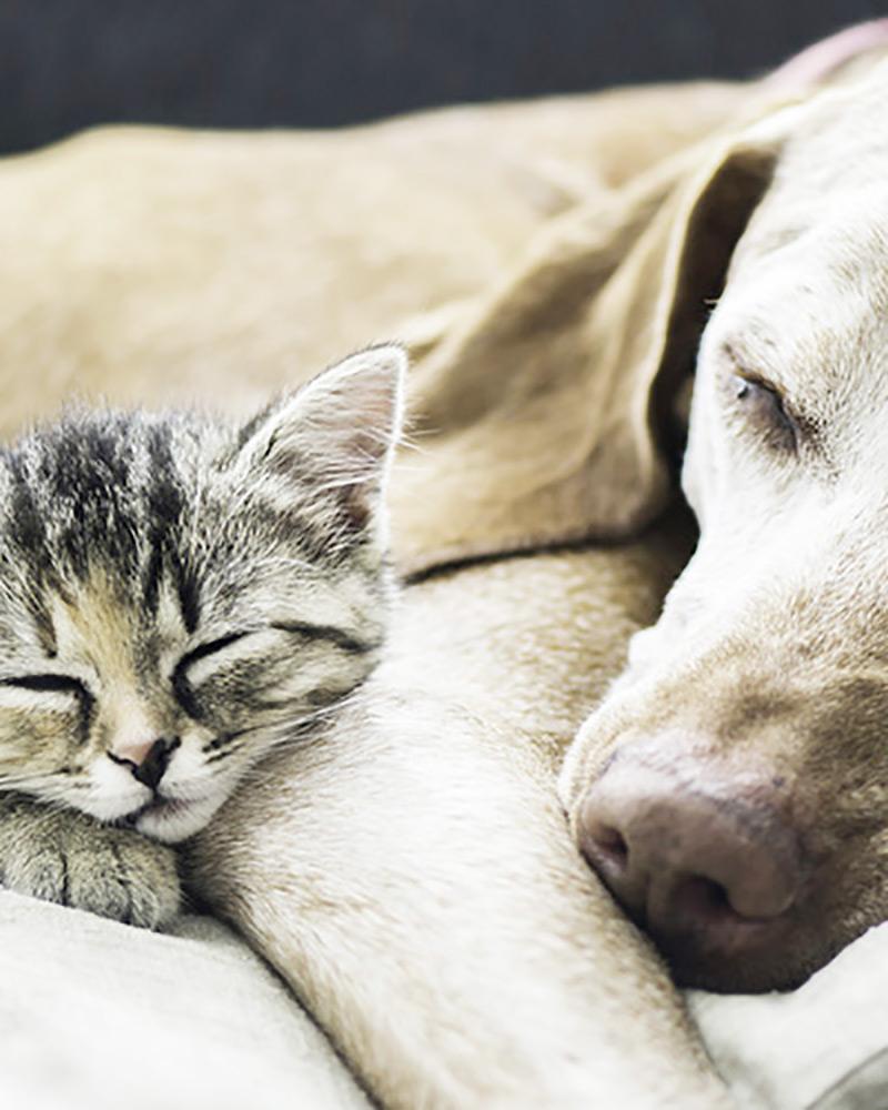 Coberturas do seguro de Animais Domésticos